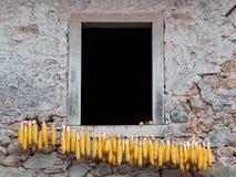 Mais, anello a D delle pannocchie di granturco sulla linea fuori della casa, Italia rurale Fotografie Stock