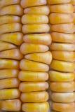 Mais auf dem Pfeiler Stockfotos