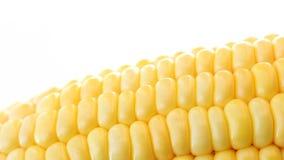 Mais auf lokalisiertem Weiß stock footage