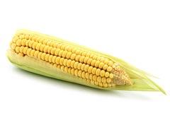 Mais auf Weiß stockfoto