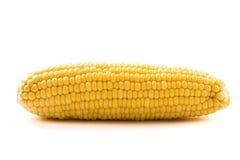 Mais auf weißem Hintergrund Stockfotos