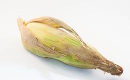 Mais auf weißem Hintergrund Stockbilder