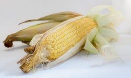 Mais auf weißem Hintergrund Stockbild