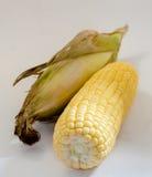 Mais auf weißem Hintergrund Stockfoto