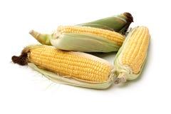 Mais auf wei?em Hintergrund stockfotos