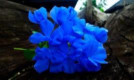Mais azul do que o azul fotografia de stock