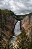 Mais baixas quedas de Yellowstone Fotos de Stock Royalty Free