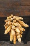 Mais betriebsbereit zum Trocknen. Stockfoto