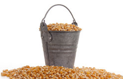 Mais in a bucket Royalty Free Stock Images