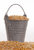 Mais in a bucket Stock Images