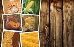 Mais del cereale nell'agricoltura, collage della foto Fotografie Stock Libere da Diritti