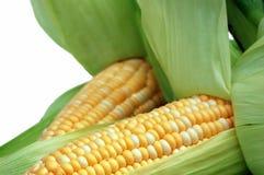 Mais in den Hülsen getrennt auf Weiß Stockfotografie