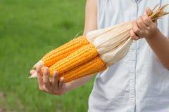 Mais in der Handfrau, die draußen steht Stockbilder