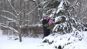 Mais distante com bebê agite fora a neve dos ramos do arbusto no wintergarden 4K filme