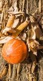Mais e zucca maturi sul festival del raccolto di ringraziamento di autunno fondo, alimento fotografie stock libere da diritti