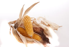 Mais et maïs éclaté Photo stock