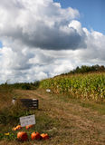 Mais-Feld Stockbilder