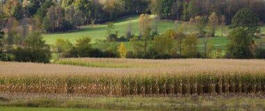Mais-Feld mit einer hügeligen Landschaft lizenzfreies stockbild