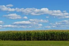 Mais-Feld mit Wolken im Himmel lizenzfreies stockbild