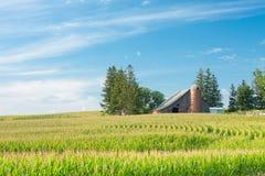 Mais-Feld und Bauernhof stockfotografie