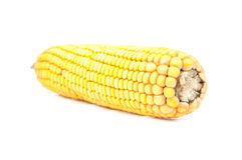 Mais getrennt lizenzfreie stockfotografie