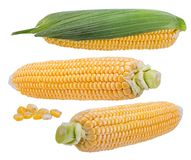 Mais getrennt auf Weiß Lizenzfreies Stockfoto