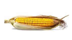 Mais getrennt auf Wei? lizenzfreies stockfoto