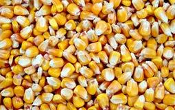 Mais grain Stock Images