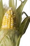 Mais-Hülse teilweise abgezogen, Nahaufnahme Stockfotos
