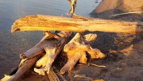 Mais madeira lançada à costa Imagens de Stock Royalty Free