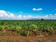 Mais-Maisbauernhof in Tansania Afrika stockbilder