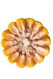 Mais-Maiskolben Stockbild