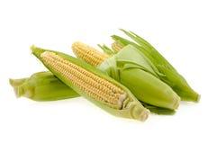 Mais mit Blättern Stockbilder