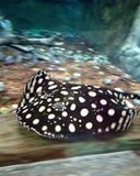 Mais peixes no aquário grande imagens de stock royalty free