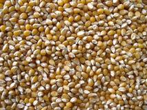 Mais popcorn. Seed background close up Royalty Free Stock Image