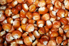Mais seeds Stock Images