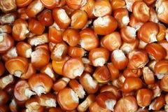 Mais seeds Stock Images