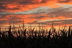 Mais. Sky tramonto fire color Stock Images