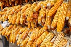 Mais trocken für die Herstellung des Popcorns Stockfotos