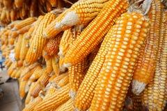 Mais trocken für die Herstellung des Popcorns Lizenzfreie Stockbilder