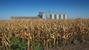Mais-Trockner-Silos, die auf einem Gebiet von Mais stehen lizenzfreie stockfotos