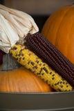Mais und Kürbise stockbild