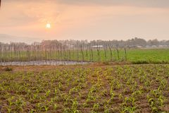 Mais und Kartoffel-Ackerland, Nord von Thailand Lizenzfreie Stockfotografie