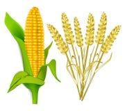 Mais und Korn vektor abbildung