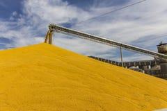 Mais und Korn, die Anschluss behandeln oder ernten Mais kann für Lebensmittel, Zufuhr oder Äthanol II benutzt werden Stockfotografie