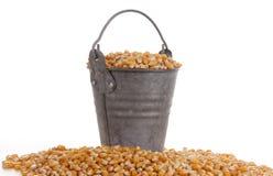 Mais w wiadrze Obrazy Royalty Free