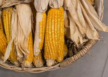 Mais, Weizen lizenzfreies stockfoto