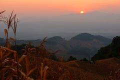 Maisbauernhof-Sonnenuntergangansichten. Lizenzfreie Stockfotos