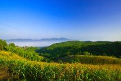 Maisbearbeitung auf dem Berg Stockfoto