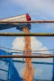 Maisernte auf Ackerland Stockbild